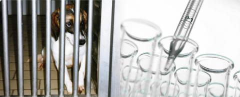 99 av 100 ansökningar om djurförsök godkänns