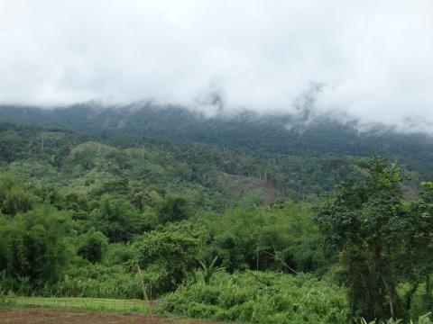 Ulovligt importeret teaktræ fra Myanmar på luksus lystyachts
