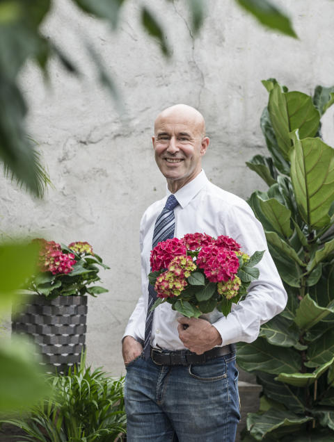 Mark Levengood gillar svenskodlad hortensia