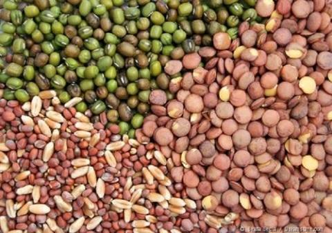 Global Vegetable Seed Market Global Industry Analysis, Size, Share, Growth, Trends and Forecast 2017 – 2020 with top key players like Monsanto, Syngenta, Limagrain, Bayer CropScience, Rijk Zwaan and others