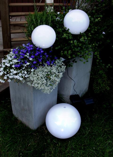 Solladdad trädgårdsglob blommor