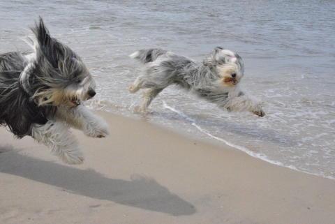 Hundstage auf Sylt
