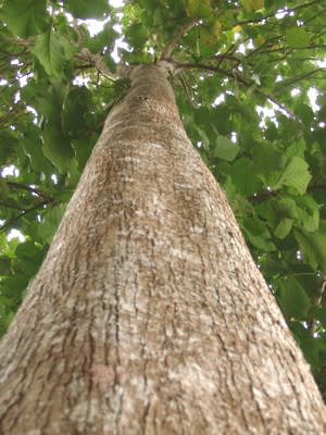 Internationaler Tag der Wälder am 21. März 2013