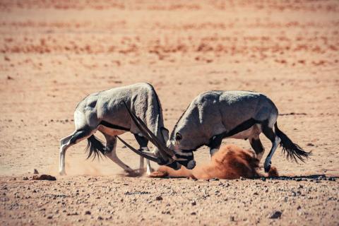 Alphaddicted_Roadtrip Namibia_08