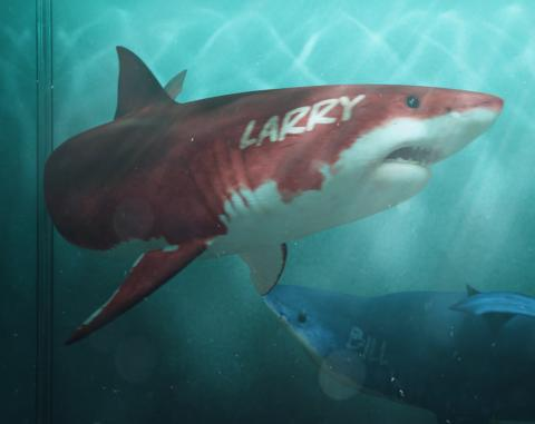 Targeting CFOs and CTOs with a digital campaign featuring sharks