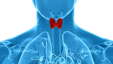 Know Details about Thyroid Function Tests Market with top key players - Sigma-Aldrich Co. LLC., Abbott Laboratories, Beckman Coulter, Inc., Siemens Healthcare GmbH and others