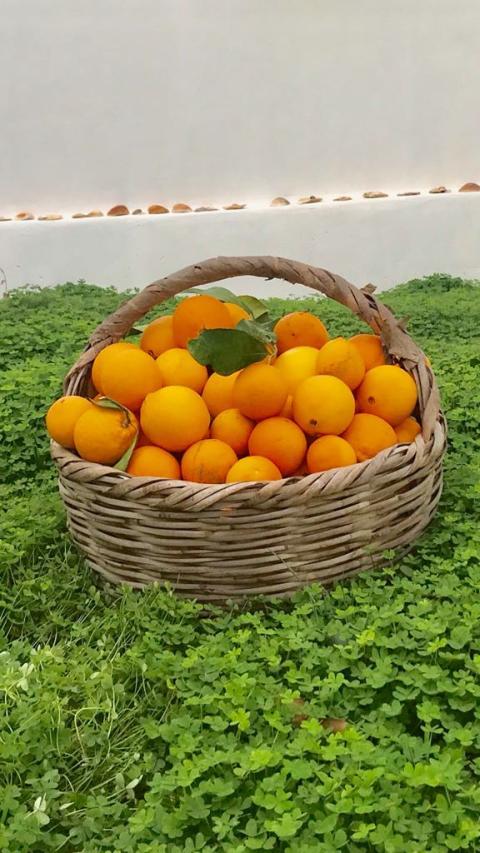 apelsinkorg