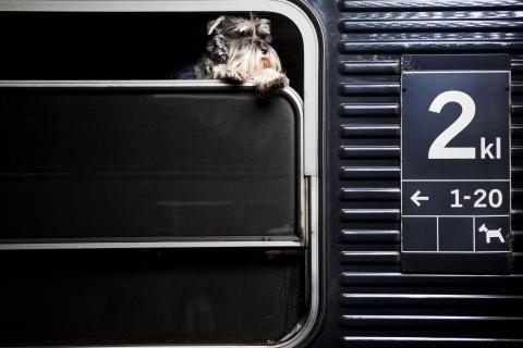 Djur på tåg
