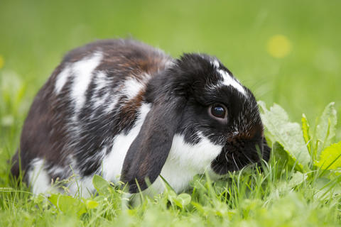 Svartvit kanin i grönska