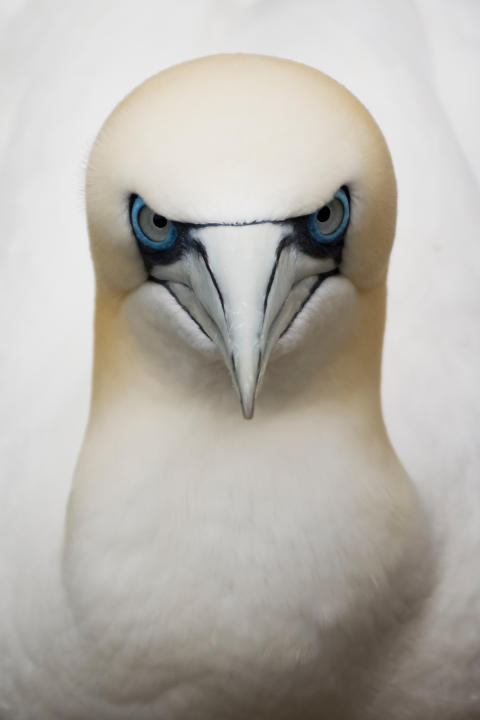 Eugene Kitsios, Eye to eye