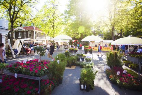 Fröer, sticklingar och plantor finns att handla på marknaden