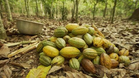 Cocoa MDLZ 2