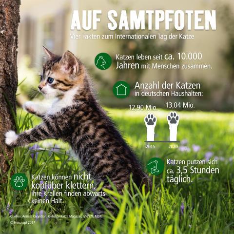 Internationaler Tag der Katze: Infografik rund um den Stubentiger