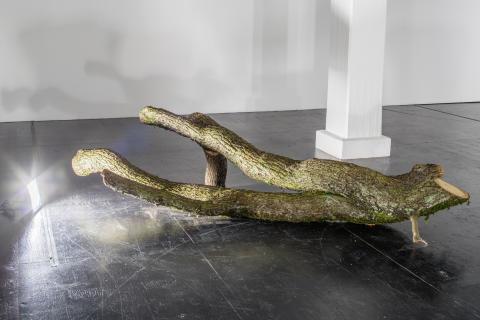 Detalj av eken. Foto: Jean-Baptiste Beranger