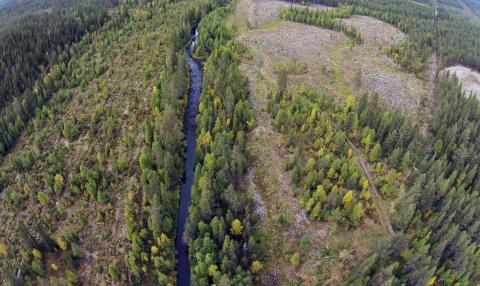 Naturhänsyn fungerar: Sparad strandskog gynnar mångfald