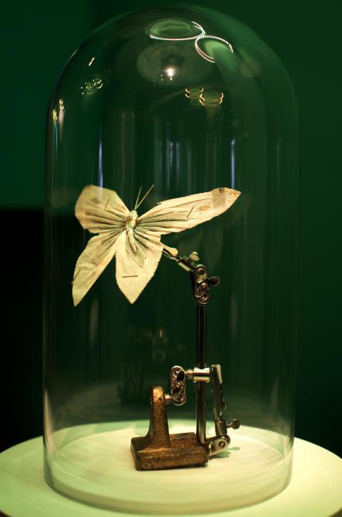 fjäril - VI & DOM - en utställning om hatbrott