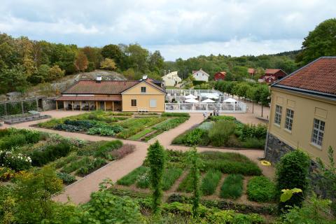 Gamla köksträdgården sommar 2018