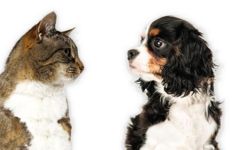 Ny behandlingsrekommendation för hjärtsjukdom och hjärtsvikt hos hund och katt