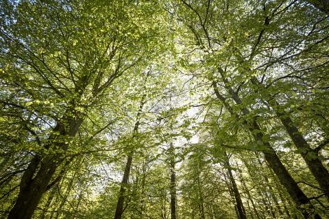 Upptäck Växjös friluftsliv på Naturens dag