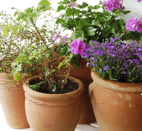 Garden by Munthe Terra collection
