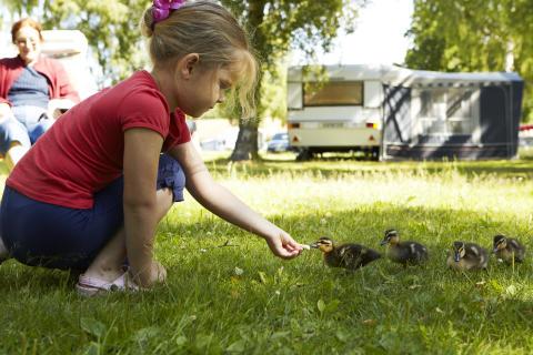 Hver tredje dansker i Sverige camperer
