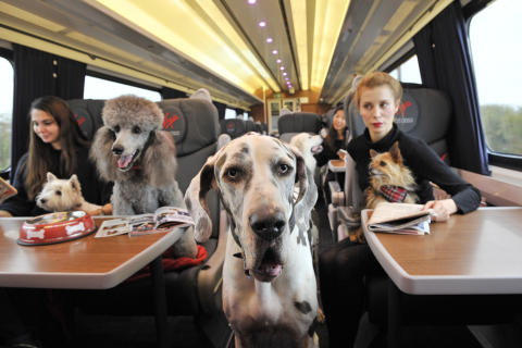 Animal-loving Brits put pets before plans at Christmas reveals new research by Virgin Trains