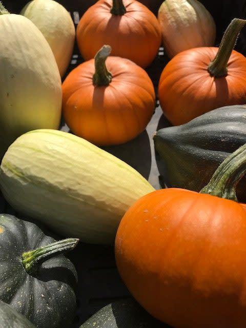 Höstens vackraste grönsaker i olika former och färger!