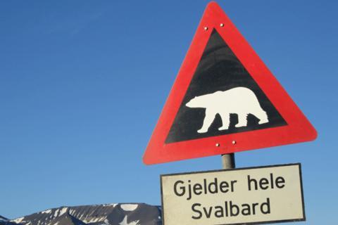 Isbjørnskilt på Svalbard