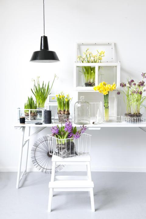 Vårligt arrangemang med blomsterlök