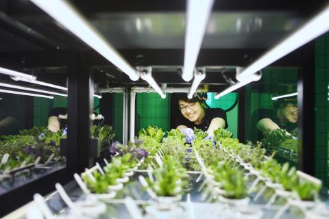 Sallad odlad i Ingka-koncernens globala kontor