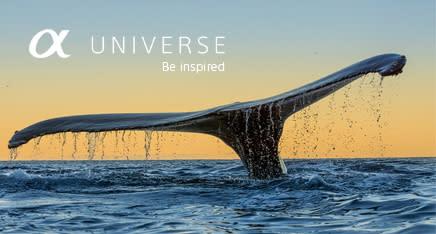 Sony Alpha Universe_8