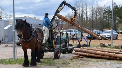 Ny undersökning om hästföretag: stort intresse att vidareutbilda sig