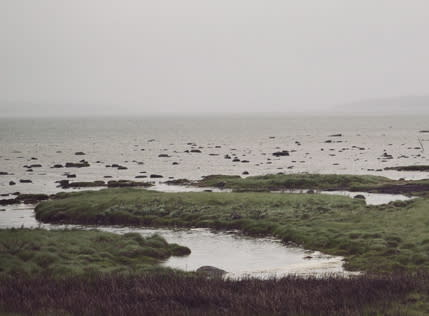 Svenskar villiga betala för friskt Östersjön