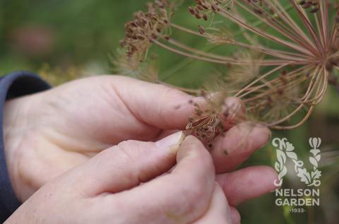 Ännu fler ekologiskt odlade fröer