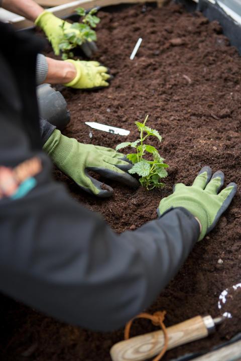 Söders Trädgård - en ny grön hub för hållbarhet på Clarion Hotel Stockholm
