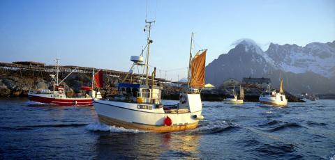 Tidenes beste halvår for norsk sjømateksport
