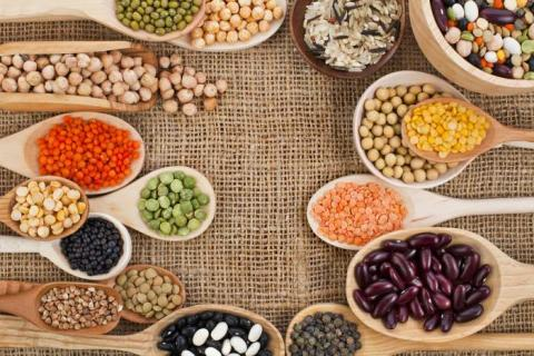 Global Plant-Based Protein Market Global Industry Analysis, Size, Share, Growth, Trends and Forecast 2017 – 2022 with top key players like - Syngenta International AG, Bayer AG, BASF SE, DowDuPont Inc., ICL, Agrium Inc and others
