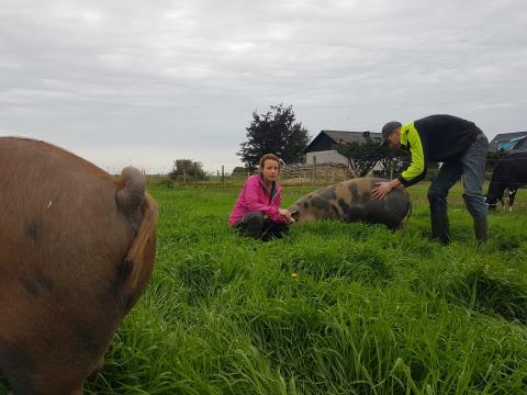 2017 års hedersutmärkelse till grisföretaget Pig och Glad