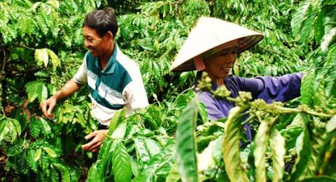 Nestlé reaffirms commitment to coffee farmers in Vietnam