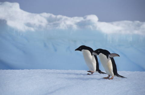 Tourism as a force for good in Antarctica?