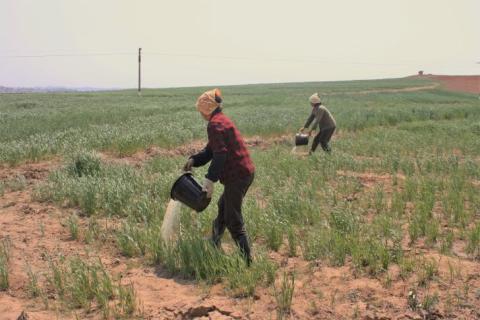 Nordkorea: Varning om hunger i torkans spår