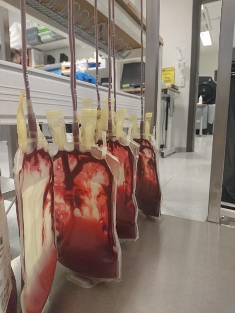 42 086 stockholmare gav blod förra året