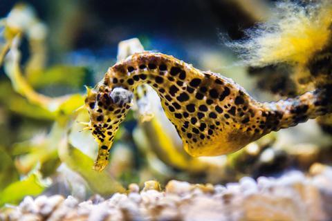 På Aquaria spirar vårkänslorna