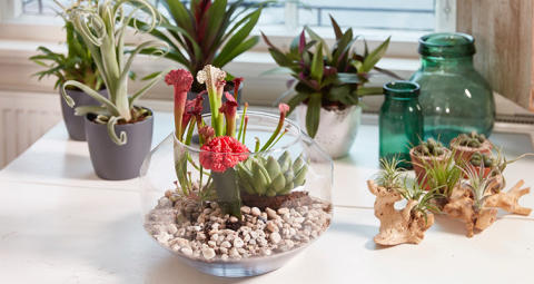 DIY: Så gör du ditt eget trendiga växtterrarium