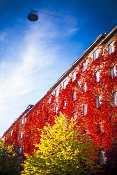 Uppsvinget har bara börjat på bostadsmarknaden i Finland