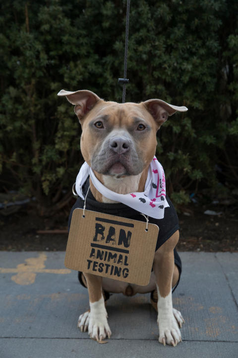 Hund i djurprotest vid FN