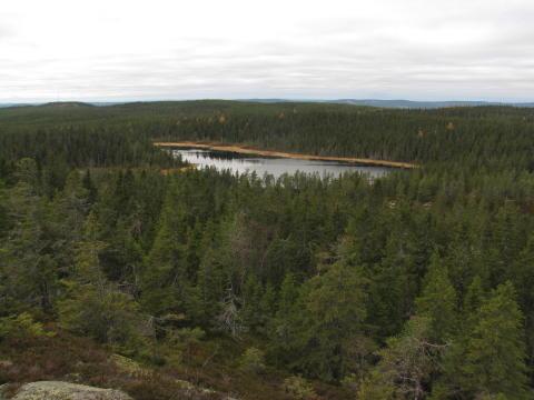 Tre nya naturreservat i Ludvika kommun