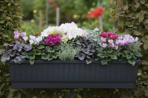 Balkonglåda med kompakta växter.