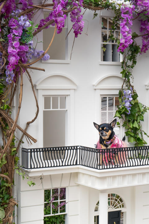 Sony Animal Eye AF _ Dolly Pawton