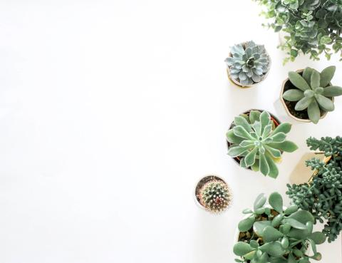 Fem planter der er perfekte til badeværelset